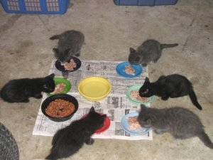Six new kittens